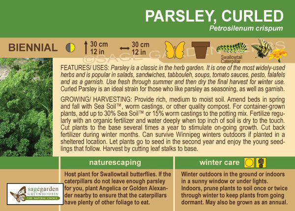 Parsley 'Curled' (Live Plant)