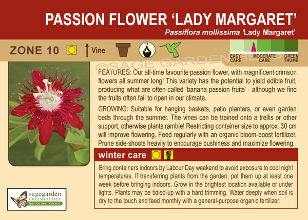 Passion Flower 'Lady Margaret' (Live Plant)