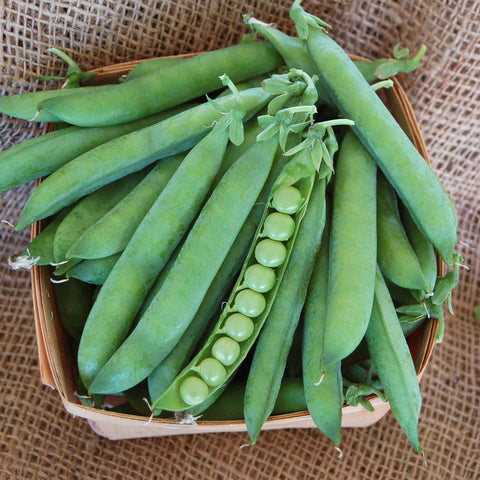 Organic Green Arrow Shell Pea