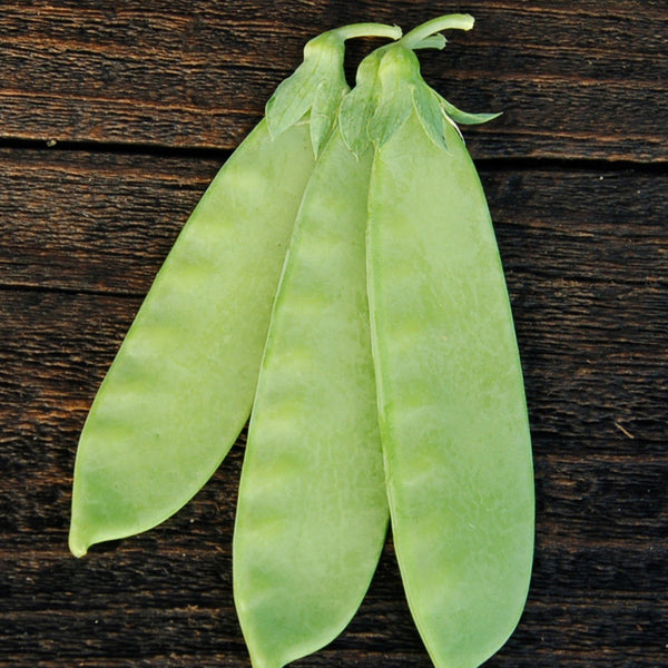 Organic Mammoth Melting Snow Pea