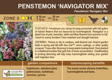Penstemon 'Navigator Mix' (Live Plant)