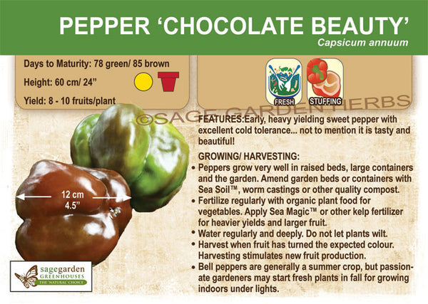 Pepper 'Chocolate Beauty' (Live Plant)