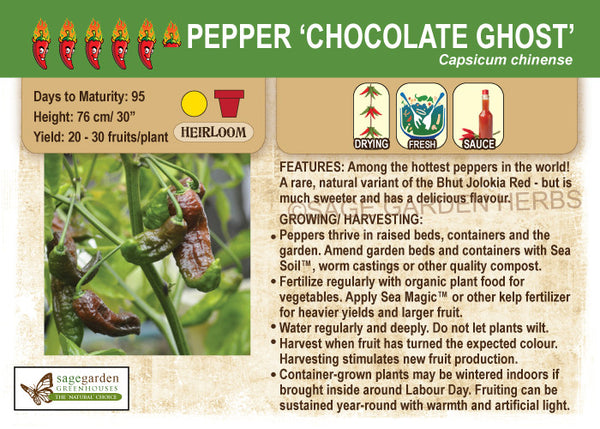 Pepper, Chocolate Ghost (Live Plant)