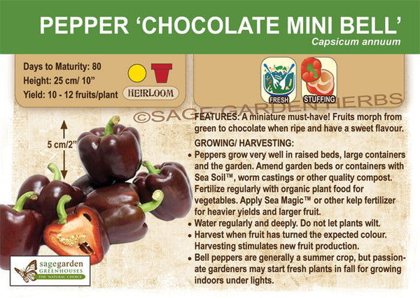 Pepper, Chocolate Mini Bell (Live Plant)