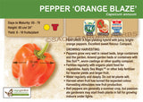Pepper, Orange Blaze (Live Plant)