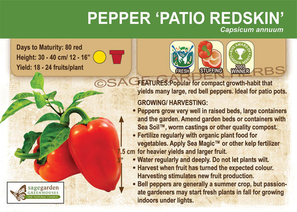 Pepper, Patio Red Skin (Live Plant)
