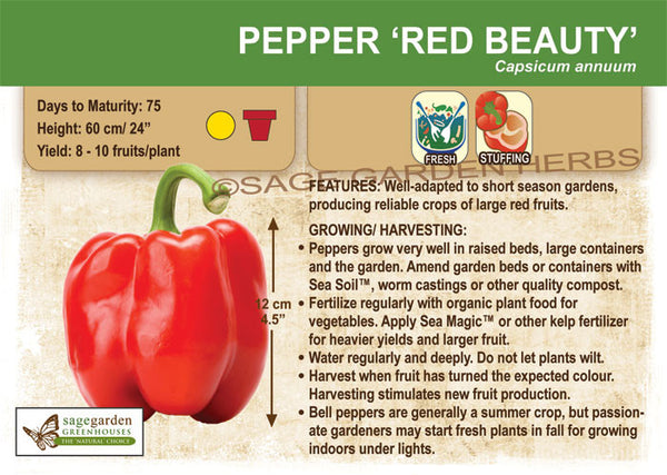 Pepper, Red Beauty (Sweet) (Live Plant)