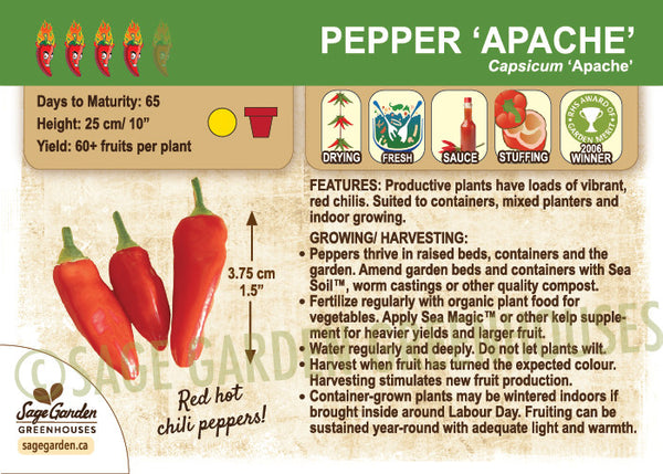 Pepper, Apache (Patio Hot) (Live Plant)