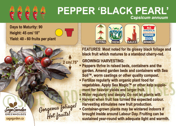 Pepper, Black Pearl (Live Plant)