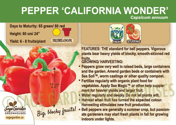 Pepper, California Wonder (Sweet) (Live Plant)