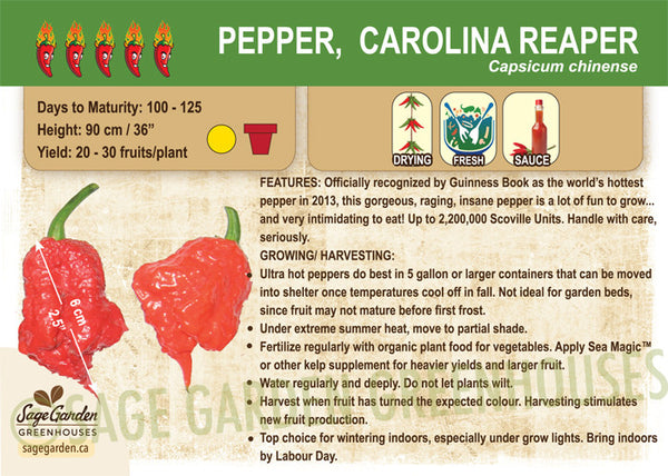 Pepper, Carolina Reaper (Live Plant)