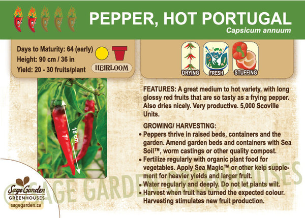 Pepper, Hot Portugal (Live Plant)