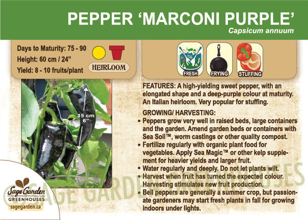 Pepper 'Marconi Purple' (Live Plant)
