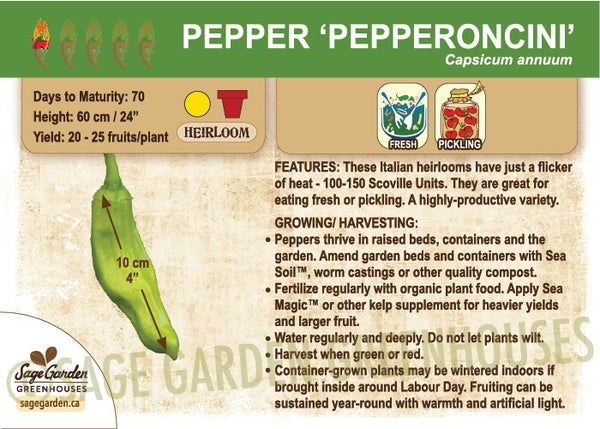 Pepper 'Pepperoncini' (Live Plant)