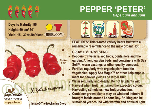 Pepper, Peter (Live Plant)