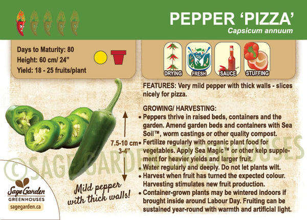 Pepper, Pizza (Live Plant)