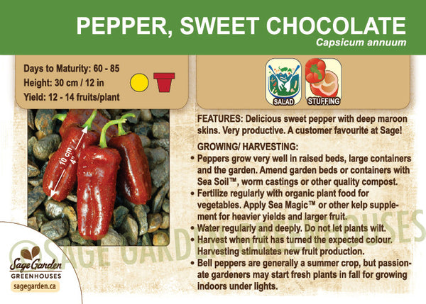 Pepper, Sweet Chocolate (Live Plant)