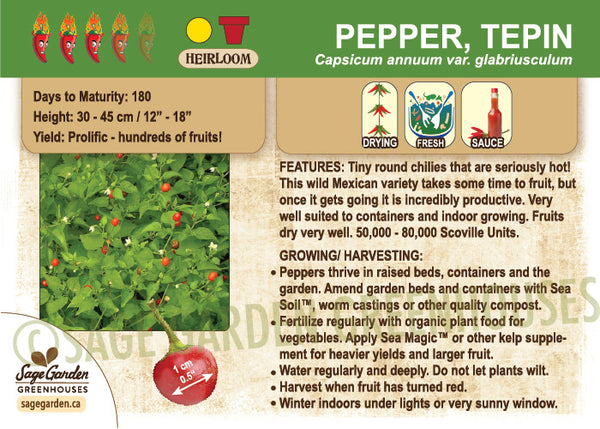 Pepper, Tepin (Live Plant)
