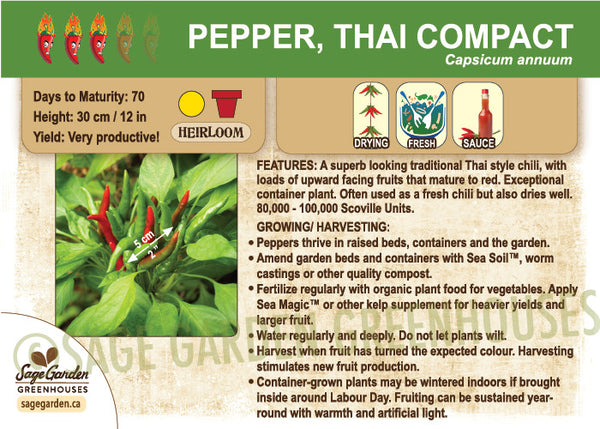 Pepper, Thai Compact (Live Plant)