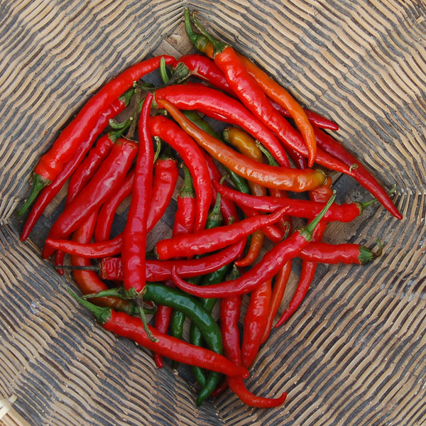 Organic Ring-O-Fire Hot Pepper