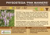 Physostegia 'Pink Manners' (Live Plant)