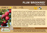 Plum 'Brookred' (Live Plant)