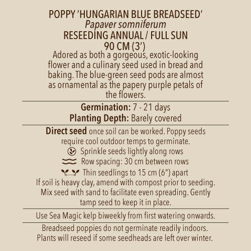 Seeds - Poppy, Blue Breadseed Hungarian OG