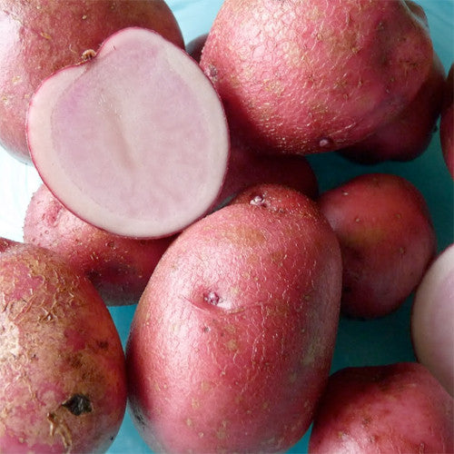 Seed Potato - Alaska Sweetheart
