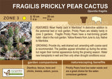 Cactus, Fragilis Prickly Pear (Live Plant)