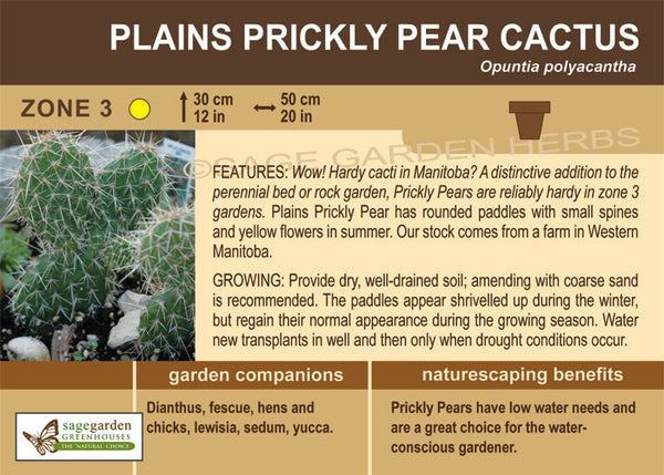 Cactus, Plains Prickly Pear (Live Plant)