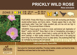 Prickly Wild Rose (Live Plant)