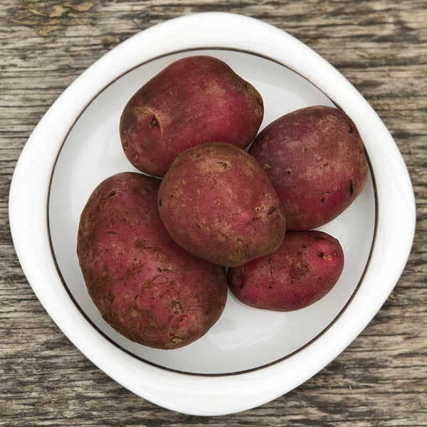 Seed Potato - Roko Red (Certified Organic)