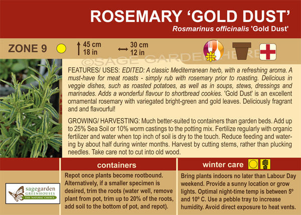 Rosemary 'Gold Dust' (Live Plant)
