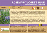 Rosemary 'Logee's Blue' (Live Plant)