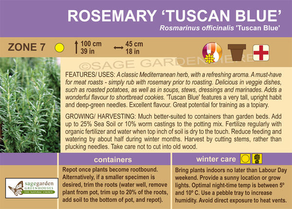 Rosemary 'Tuscan Blue' (Live Plant)