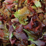 Red Planet Salad Mix at Sage Garden Greenhouses