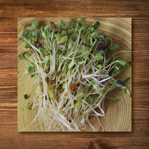 Sandwich Booster Sprouting Seeds - Certified Organic