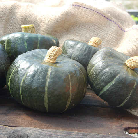 Organic Burgess Buttercup Winter Squash
