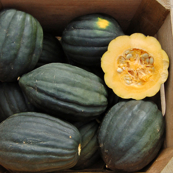 Seeds - Squash, Table Queen Acorn OG