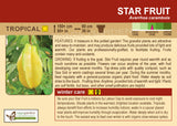 Star Fruit (Live Plant)