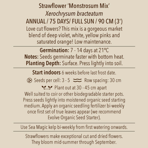 Seeds - Strawflower, Monstrosum Mix OG
