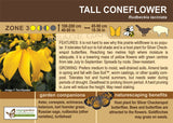 Tall Coneflower (Live Plant)
