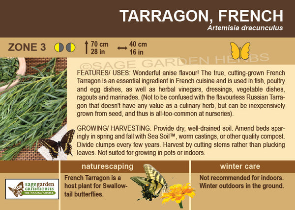 Tarragon 'French' (Live Plant)