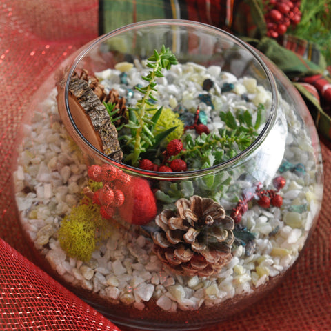 Terrarium D.I.Y. Workshop