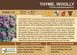 Thyme, Woolly (Live Plant)