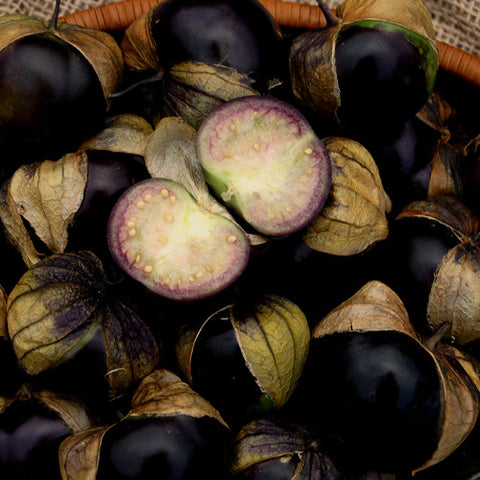 Organic Purple Tomatillo