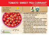 Live Plant - Tomato, Sweet Pea Current