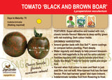 Black and Brown Boar Tomato at Sage Garden