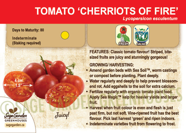 Tomato, Cherriots of Fire (Live Plant)