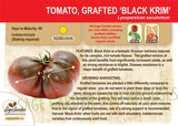Grafted Black Krim Tomato at Sage Garden